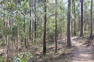 Bunyaville trail - Tree Discovery Circuit